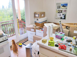 photo of kitchen with cat & boxes