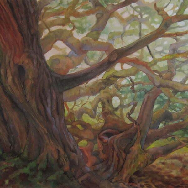 undermonterey-cypress600